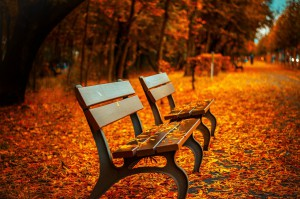 image of bench with leaves changing color
